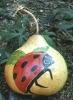 burned dyed ladybug